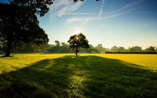 tree-canopy-shadow-in-summer-wallpaper-5331c064eaf16